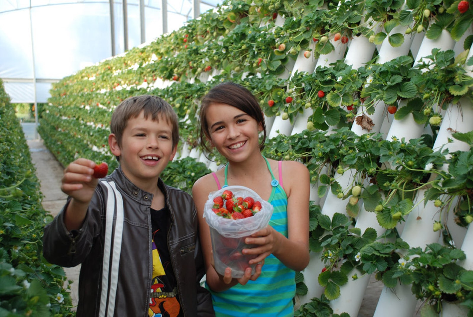 Things to do Port Macquarie Strawberry picking